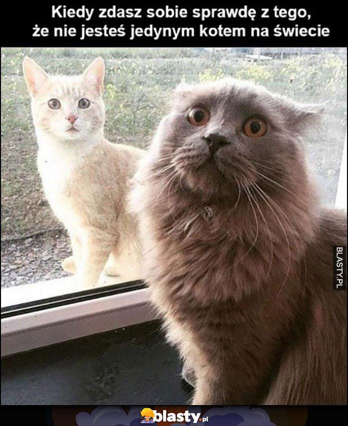 Kot koty kiedy zdasz sobie sprawę z tego, że nie jesteś jedynym kotem na świecie