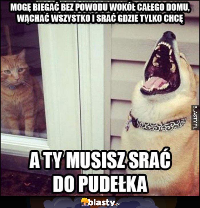 Kot pies, mogę biegać bez powodu wokół całego domu, wąchać wszystko i srać gdzie tylko chcę a ty musisz srać do pudełka