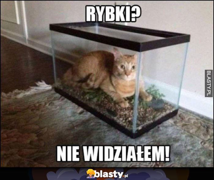 Kot w akwarium: rybki? nie widziałem!