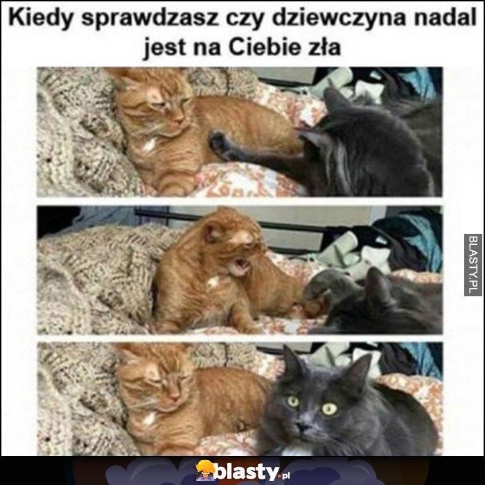 Koty kiedy sprawdzasz czy dziewczyna nadal jest na Ciebie zła