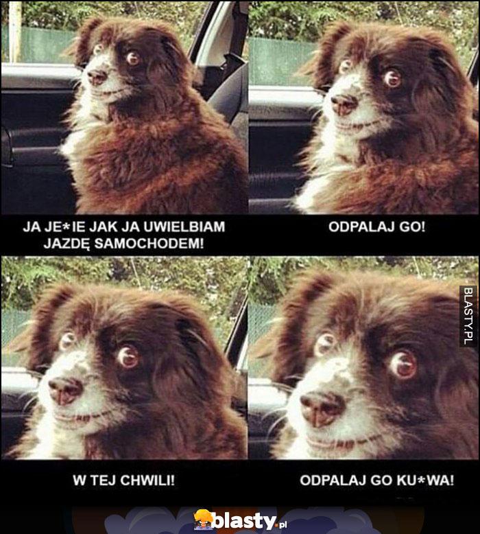 Pies uwielbiam jazdę samochodem, odpalaj go w tej chwili