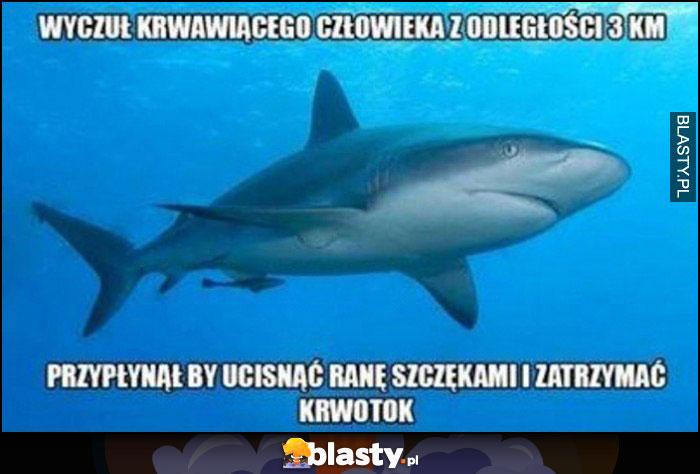Rekin wyczuł krwawiącego człowieka z odległości 3 km, przypłynął by uścisnąć ranę szczękami i zatrzymać krwotok