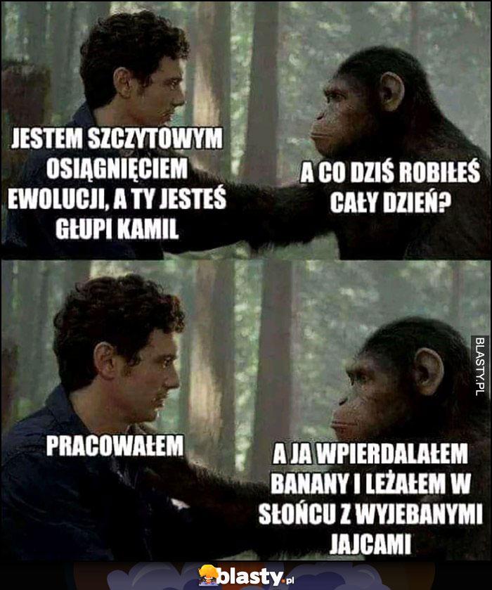 Człowiek małpa: jestem szczytowym osiągnięciem ewolucji, a ty jesteś głupi. A co dziś robiłeś cały dzień? Pracowałem, a ja jadłem banany i leżałem na słońcu