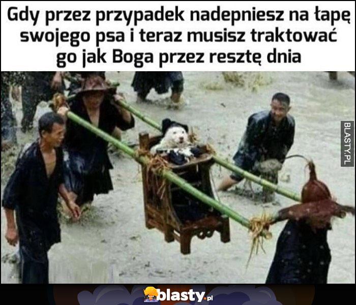 Gdy przez przypadek nadepniesz na łapę swojego psa i teraz musisz traktować go jak boga przez resztę dnia