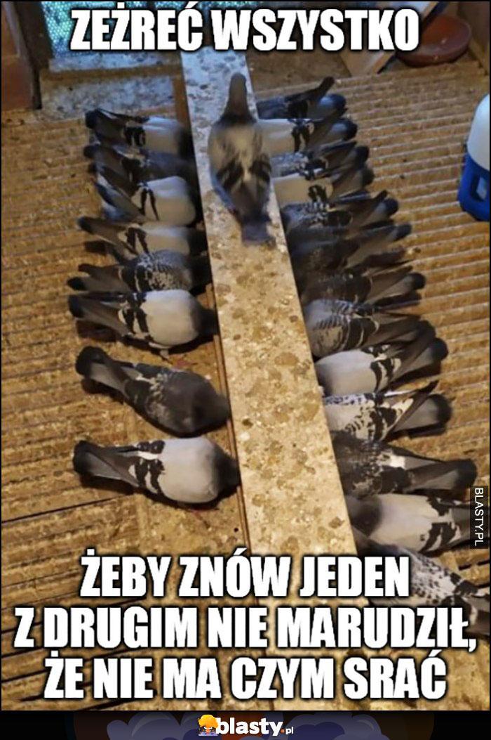 Gołębie jedzą zeżreć wszystko żeby znów jeden z drugim nie marudził, ze nie ma czym srać