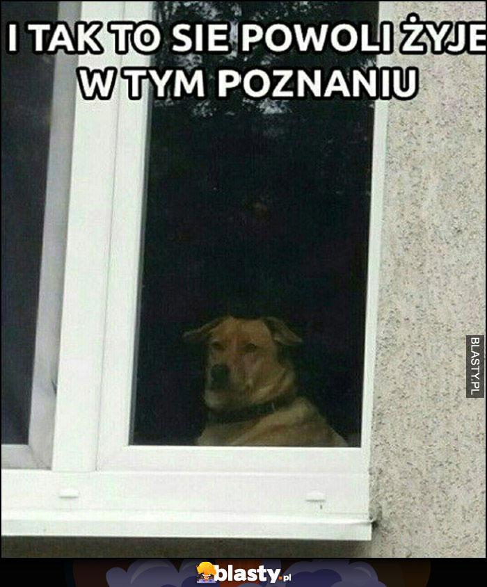 I tak to się powoli żyje w tym Poznaniu pies w oknie