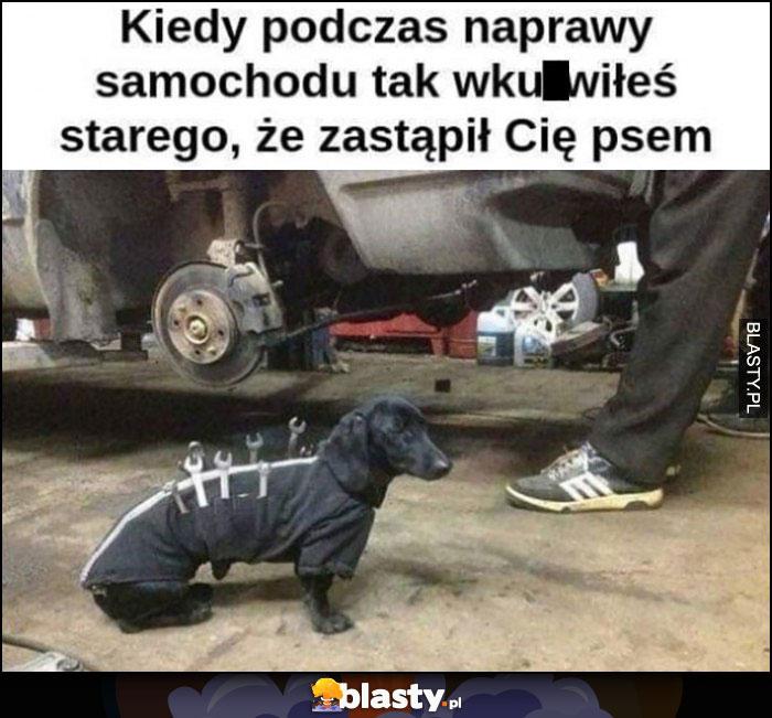 Kiedy podczas naprawy samochodu tak wkurzyłeś starego, że zastąpił Cię psem, jamnik z narzędziami