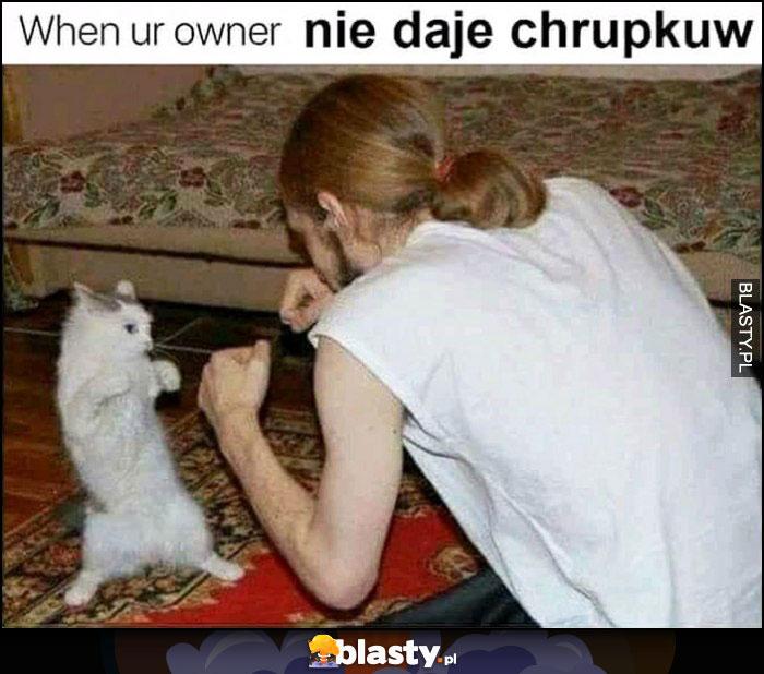 Kiedy Twój właściciel nie daje chrupków kot walczy na pięści