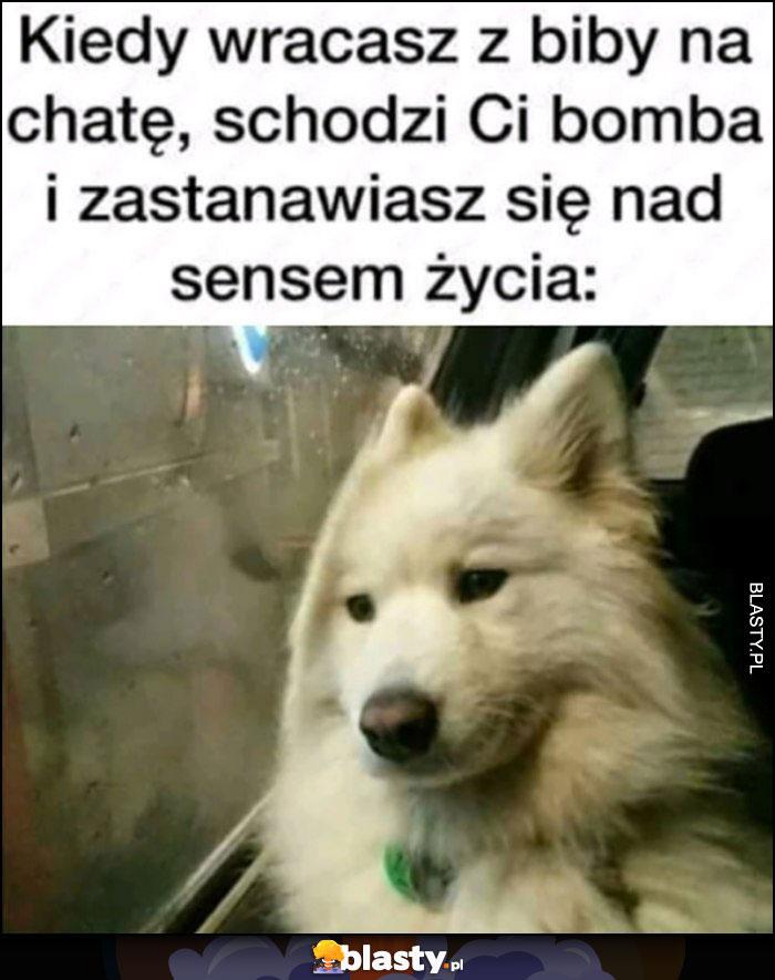 Kiedy wracasz z biby na chate, schodzi Ci bomba i zastanawiasz się nad sensem życia pies nostalgicznie patrzy przez okno