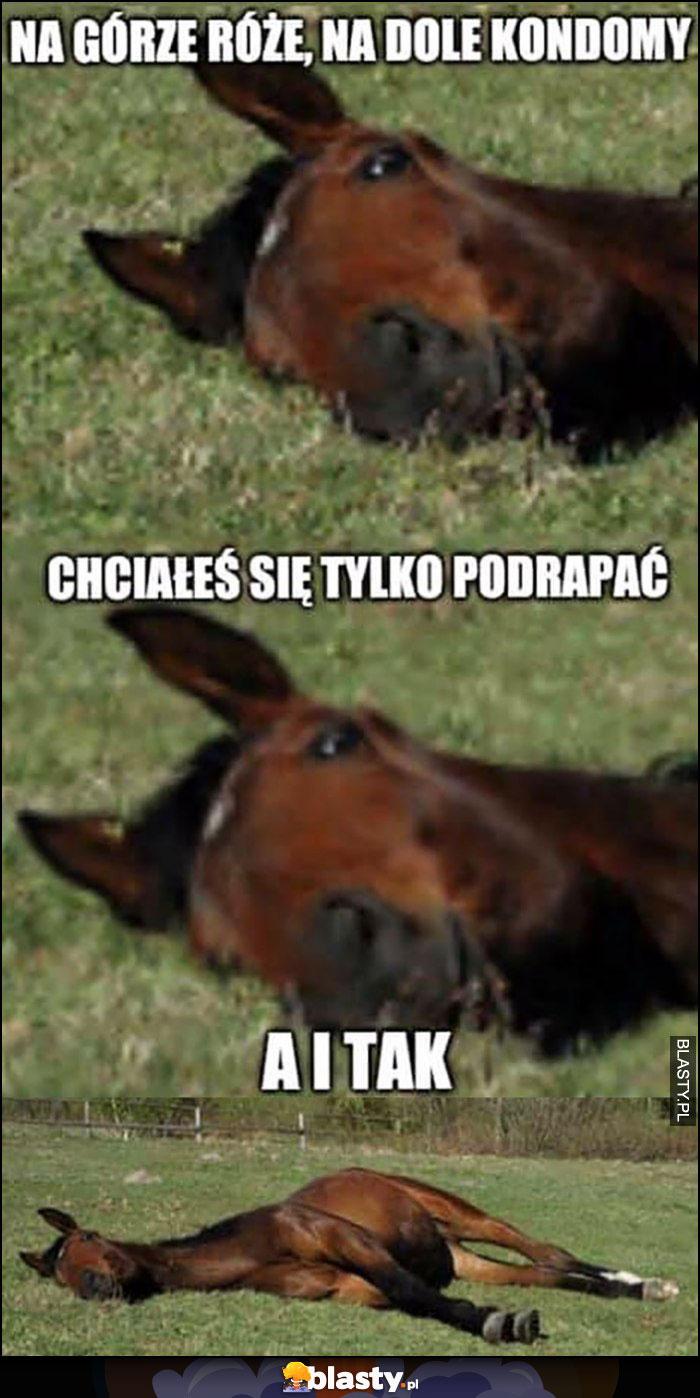 Koń leży na górze różne, na dole kondory chciałeś się tylko podrapać a i tak koń zwalony