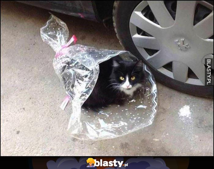 Kot bukiet kwiatów wiązanka prezent