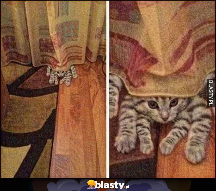 Kot pająk z wieloma łapami nogami