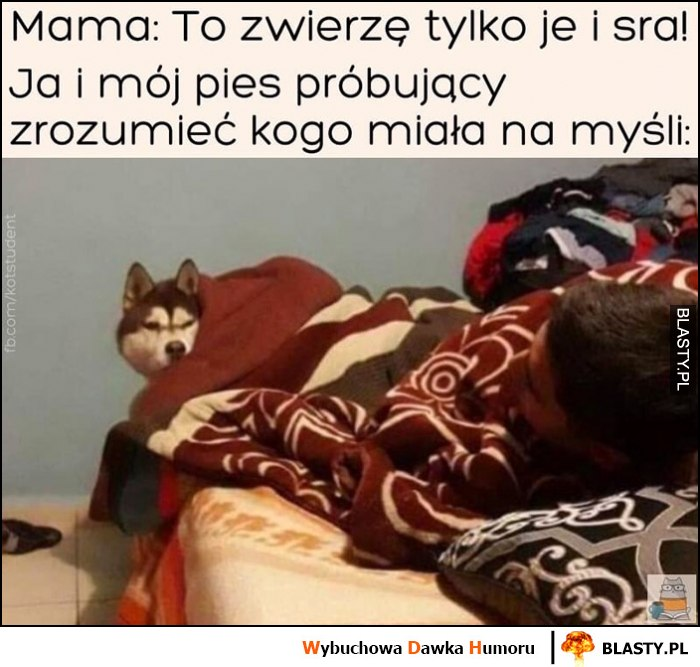 Mama: to zwierzę tylko je i sra, ja i mój pies próbujący zrozumieć kogo miała na myśli