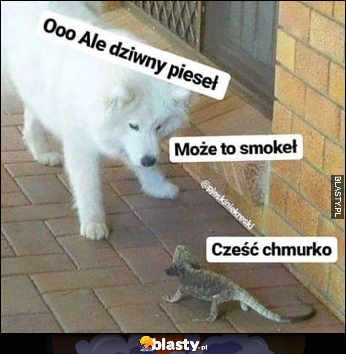 Ooo ale dziwny pieseł, może to smokeł, cześć chmurko