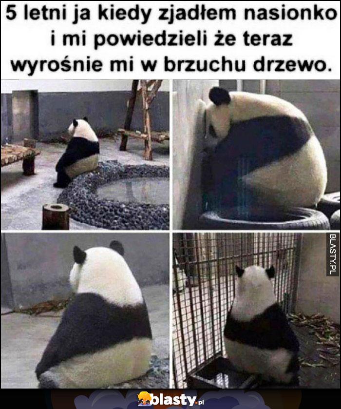 Panda 5-letni ja kiedy zjadłem nasionko i mi powiedzieli, że teraz wyrośnie mi w brzuchu drzewo