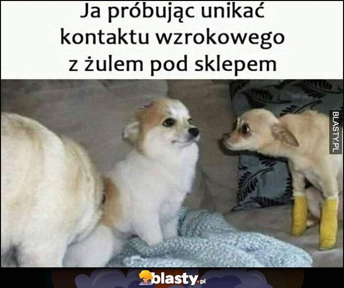 Pies psy ja próbując unikać kontaktu wzrokowego z żulem pod sklepem