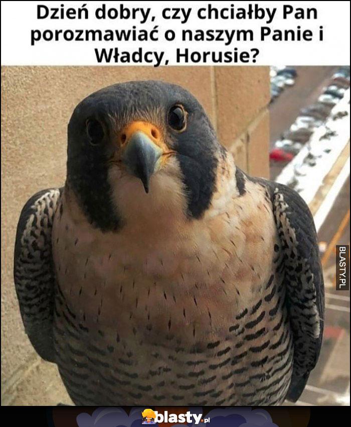 Ptak dzień dobry, czy chciałby Pan porozmawiać o naszym panie i władcy, Horusie?