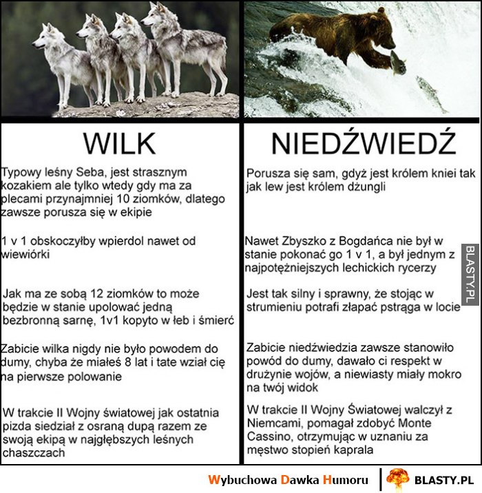 Wilk Niedźwiedź porównanie tabelka
