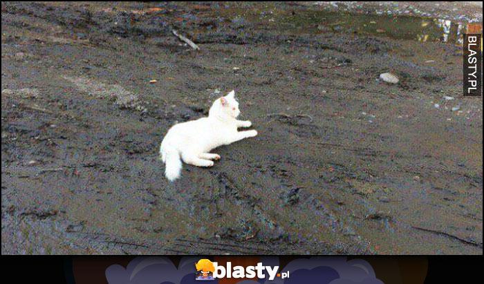 Biały kot leży na czarnej ziemi