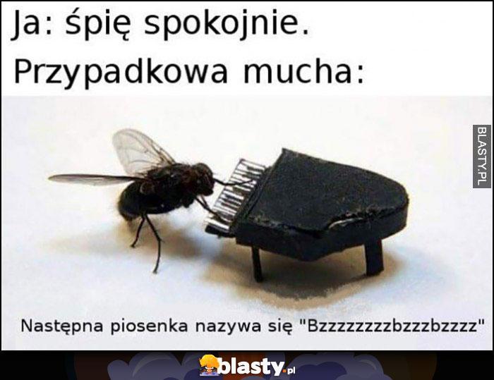 Ja: śpię spokojnie, przypadkowa mucha: następna piosenka nazywa się bzzz