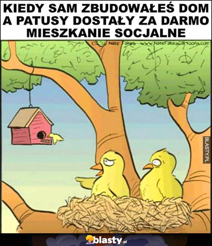 Kiedy sam zbudowałeś dom a patusy dostały za darmo mieszkanie socjalne ptaki