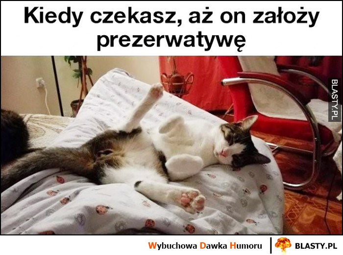 Kot leży na łóżku kiedy czekasz aż on założy gumkę