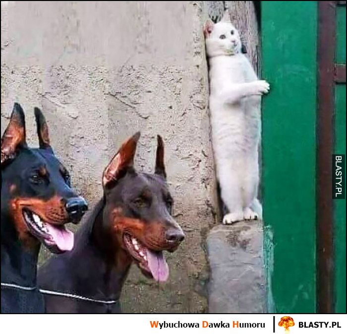 Kot ukrywa się przed dwoma psami