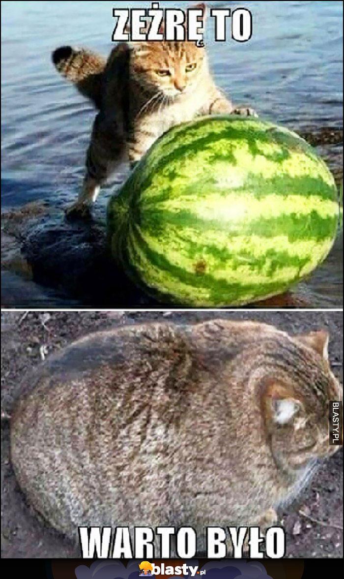 Kot wyciąga arbuza z morza, zeżrę to, warto było