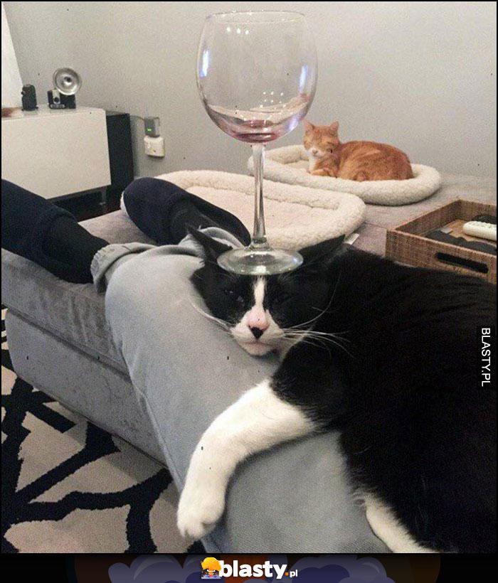Kot z kieliszkiem wina na głowie podstawka
