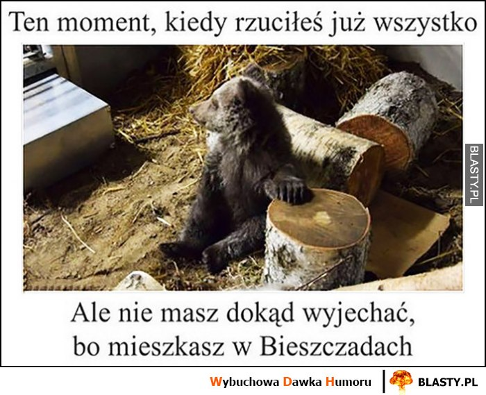 Miś niedźwiadek ten moment, kiedy rzuciłeś już wszystko ale nie wiesz dokąd wyjechać, bo mieszkasz w Bieszczadach