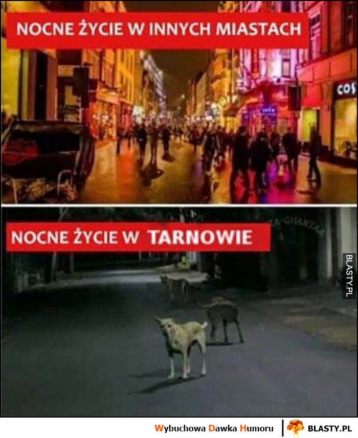 Nocne życie w innych miastach vs nocne życie w Tarnowie porównanie psy