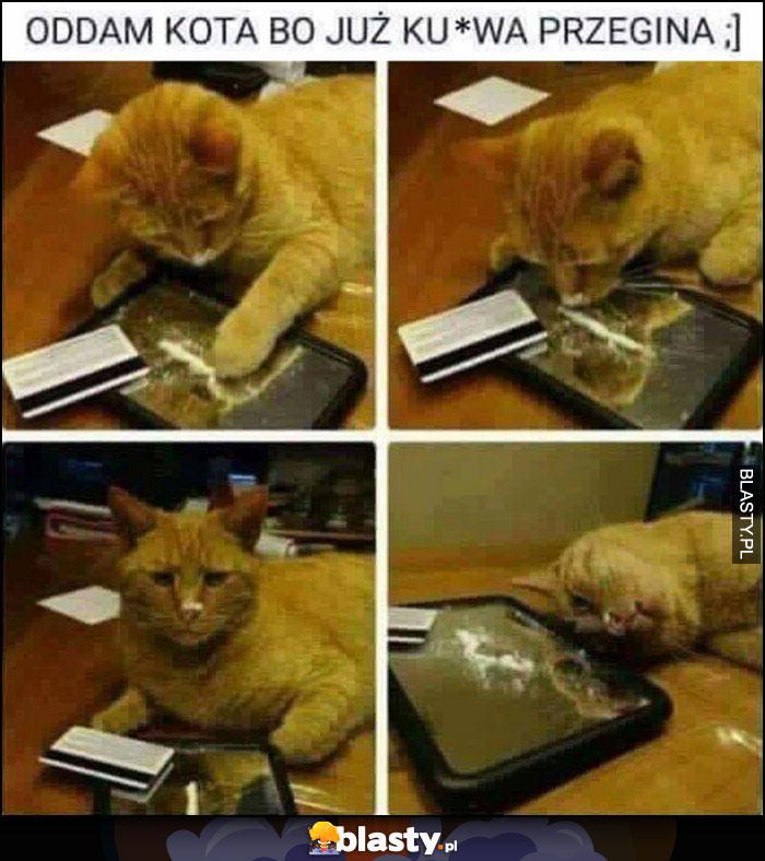 Oddam kota bo już kurna przegina ćpa wciąga narkotyki biały proszek