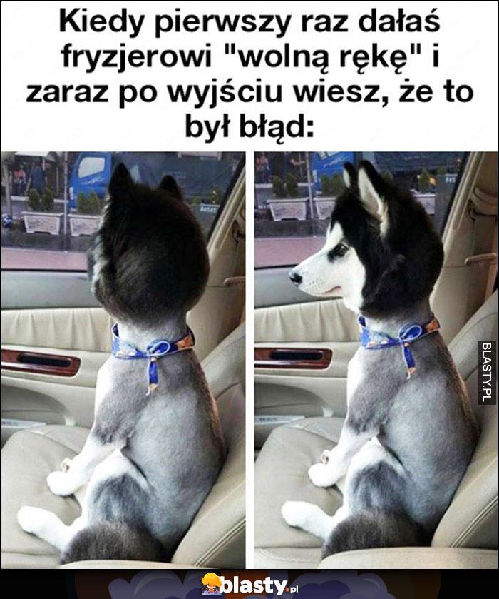 Pies po fryzjerze, kiedy pierwszy raz dałeś fryzjerowi wolną rękę i zaraz po wyjściu wiesz, że to był błąd