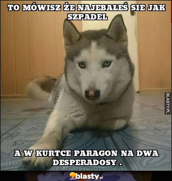 Pies: to mówisz, że nawaliłeś się jak szpadel, a w kurtce paragon na dwa desperadosy