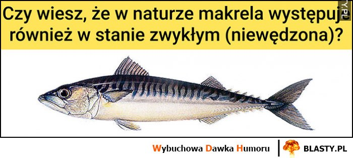 Czy wiesz, że w naturze makrela występuje również w stanie zwykłym (niewędzona)?