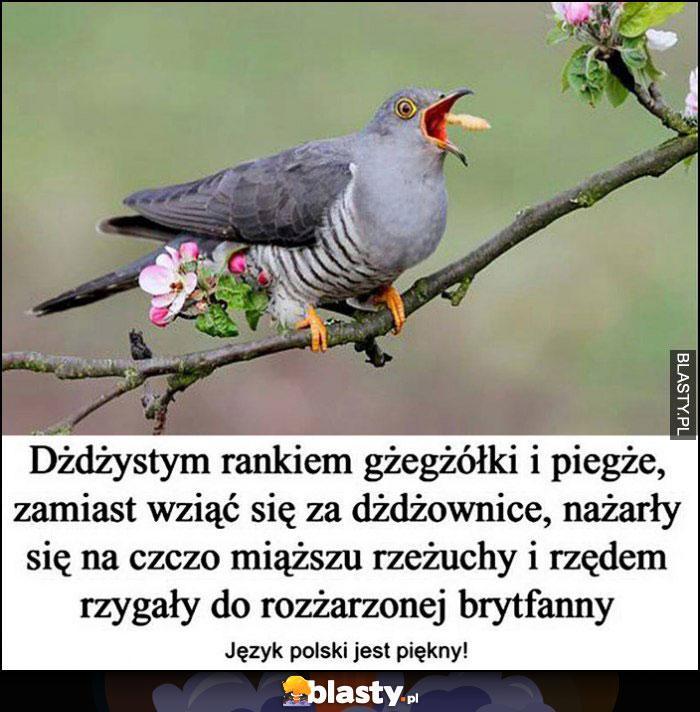 Dżdżystym rankiem gżegżółki i piegże zamiast wziąć się za dżdżownice nażarły sięna czoczo miąższu rzeżuchy i rzędem rzygały do rozżarzonej brytfanny, język polski jest piękny!