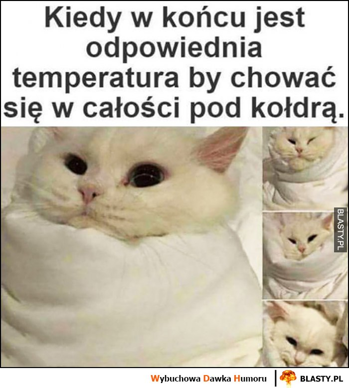 Kot kiedy w końcu jest odpowiednia temperatura by chować się w całości pod kołdrą