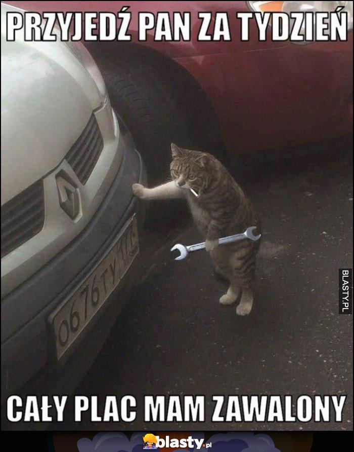 Kot mechanik przyjedź pan za tydzień, cały plac mam zawalony