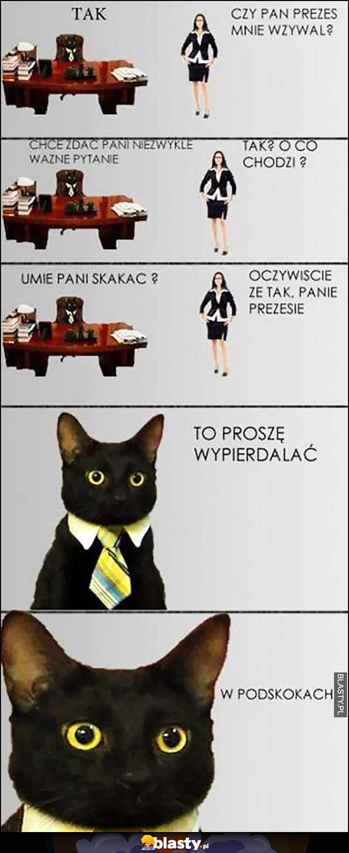 Kot prezes, wzywał mnie Pan? Umie Pani skakać, to proszę wypierdzielać w podskokach