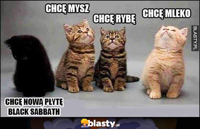 Koty: chcę mysz, rybę, mleko, czarny kot: chcę nową płytę Black Sabbath