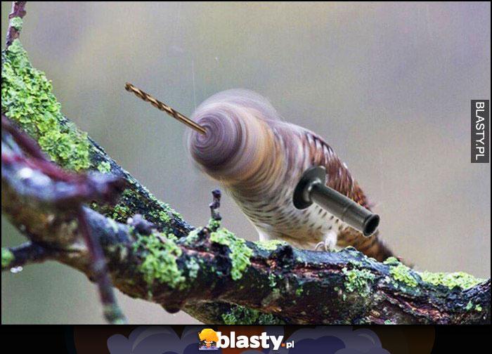 Ptak wiertarka przeróbka photoshop