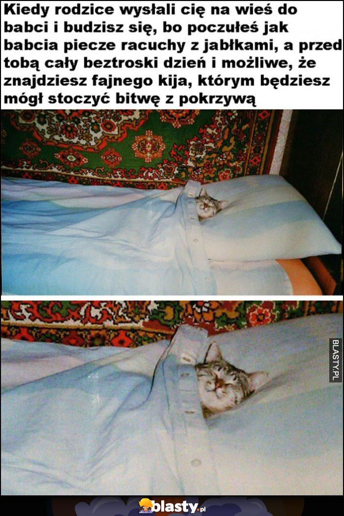 Kot kiedy rodzice wysłali cię na wieś do babci, budzisz się i przed tobą cały dzień beztroski