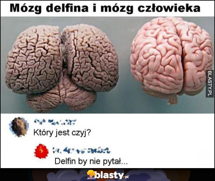 Mózg delfina i mózg człowieka, który jest czyj? Delfin by nie pytał