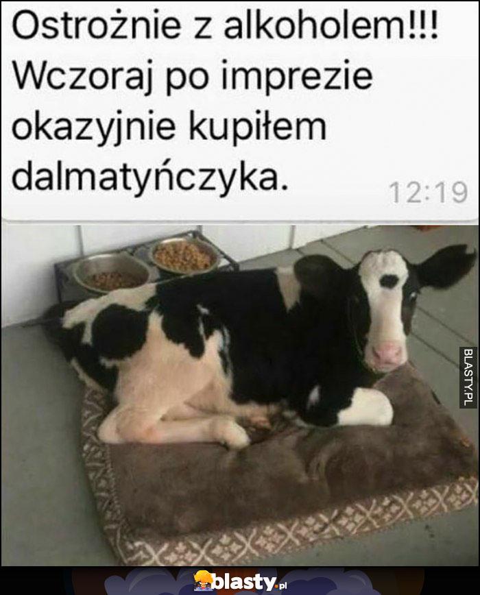 Ostrożnie z alkoholem, wczoraj po imprezie okazyjnie kupiłem dalmatyńczyka krowa