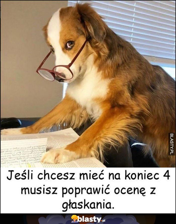Pies jeśli chcesz mieć na koniec 4 musisz poprawić ocenę z głaskania