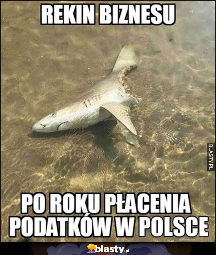 Rekin biznesu po roku płacenia podatków w Polsce zjedzony