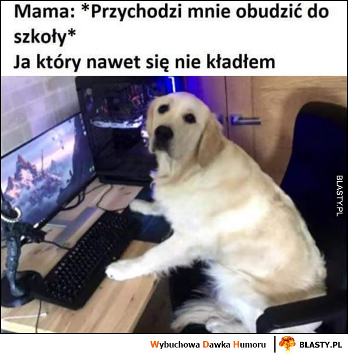 Mama przychodzi mnie obudzić do szkoły, ja który nawet się nie kładłem, pies gra na komputerze
