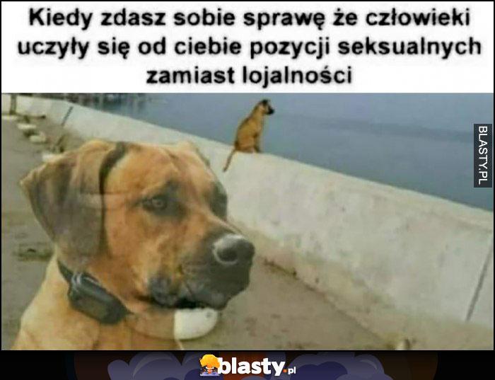 Pies kiedy zdasz sobie sprawę, że człowieki uczyły się od Ciebie pozycji seksualnych zamiast lojalności