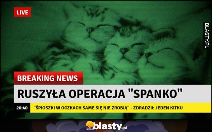 Ruszyła operacja spanko słodkie kotki breaking news