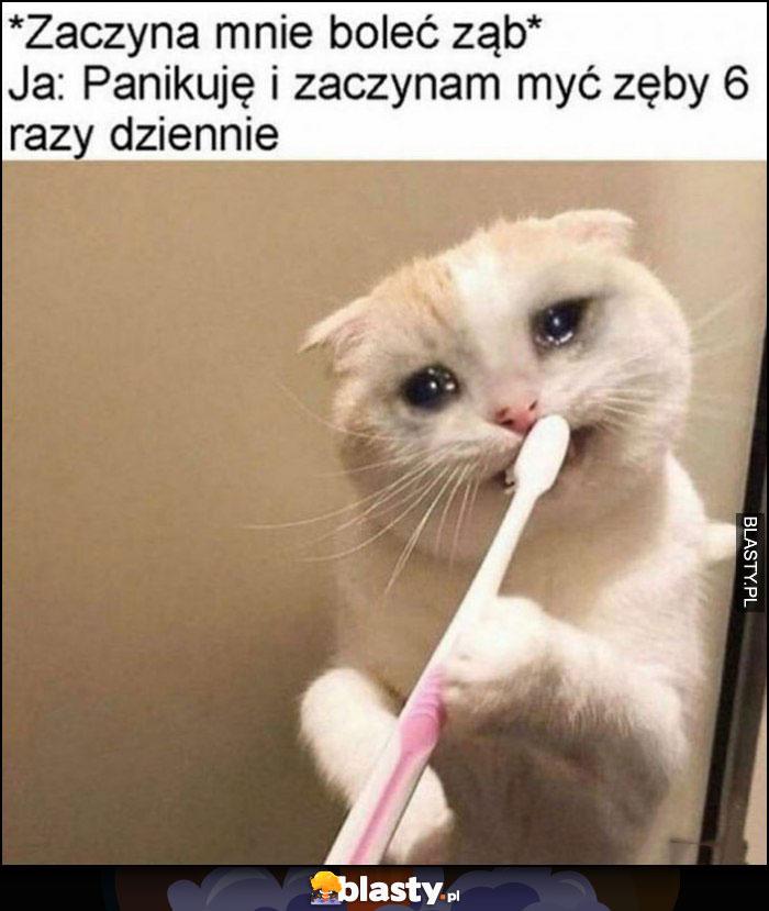 Zaczyna mnie boleć ząb, ja: panikuję i zaczynam myć zęby 6 razy dziennie kot płacze